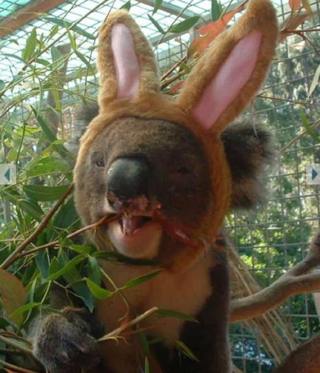 easter bunny bear
