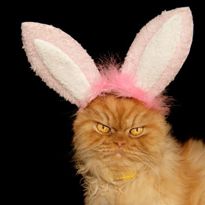 easter bunny cat2