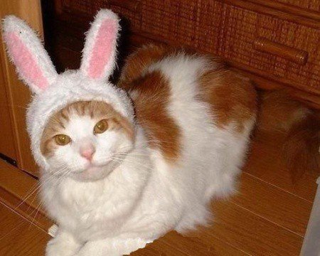 easter bunny cat3