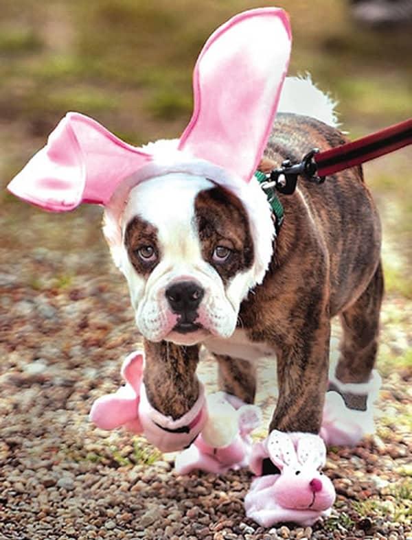 easter bunny dog2