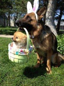 easter bunny dog3