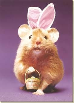 easter bunny hamster