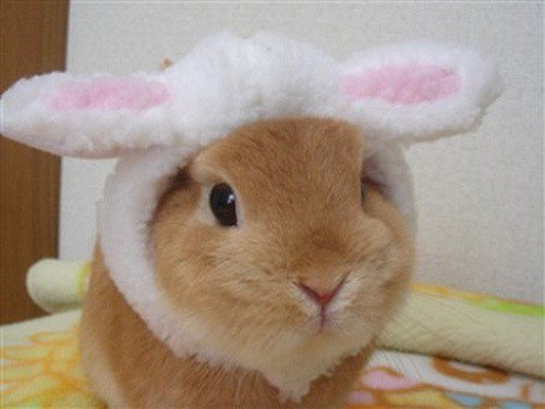 easter bunny hamster2