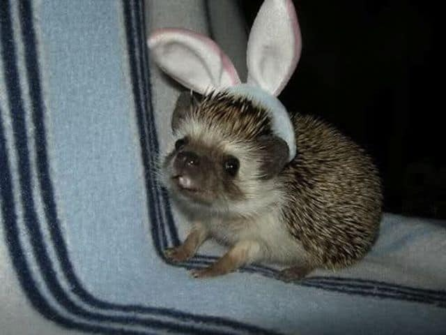 easter bunny hedgehog