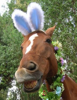 easter bunny horse