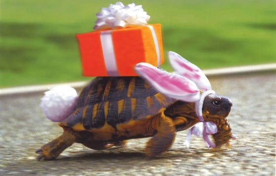 easter bunny turtle