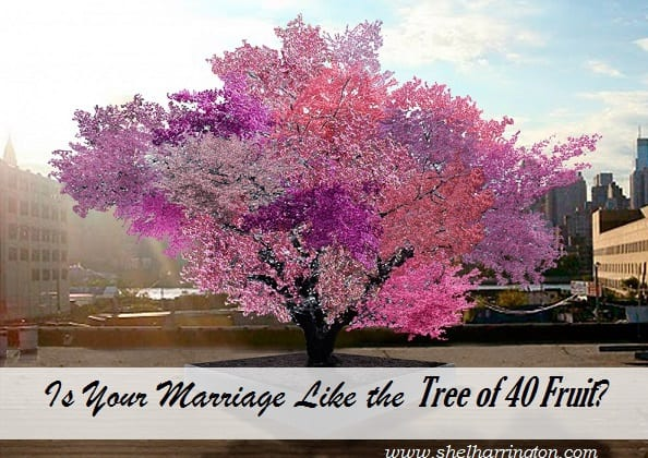 Is Your Marriage Lie the Tree of 40 Fruit edit2