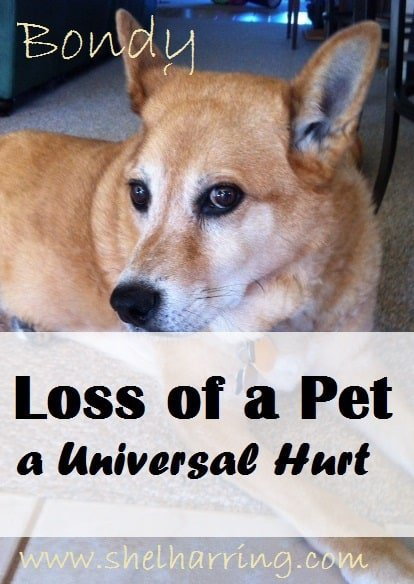 Loss of a Pet - a Universal Hurt